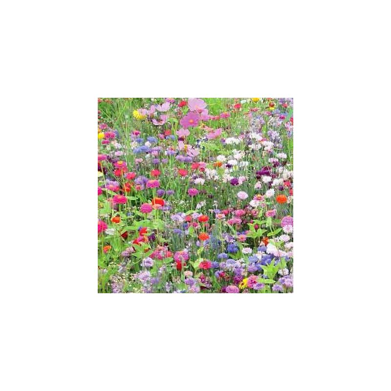 Mélange fleurie - 5 kg